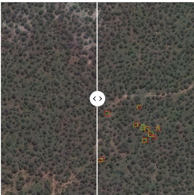 Elephant detection and tracking algorithm/Image credit to Maxar Technologies